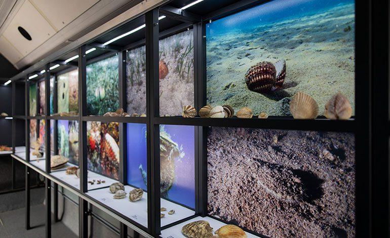 "Otvorena pokretna izložba ""Blago jadranskog podmorja"""